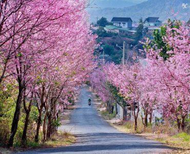 Hà Nội – Đà Lạt Thành phố ngàn hoa, 4 ngày 3 đêm