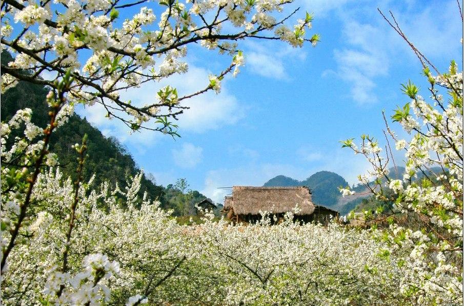 Tour Thanh hóa Mộc châu 2 ngày 1 đêm – Hoa mận – mùa xuân